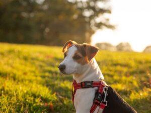 Best UK Grain-Free Dry Dog Foods