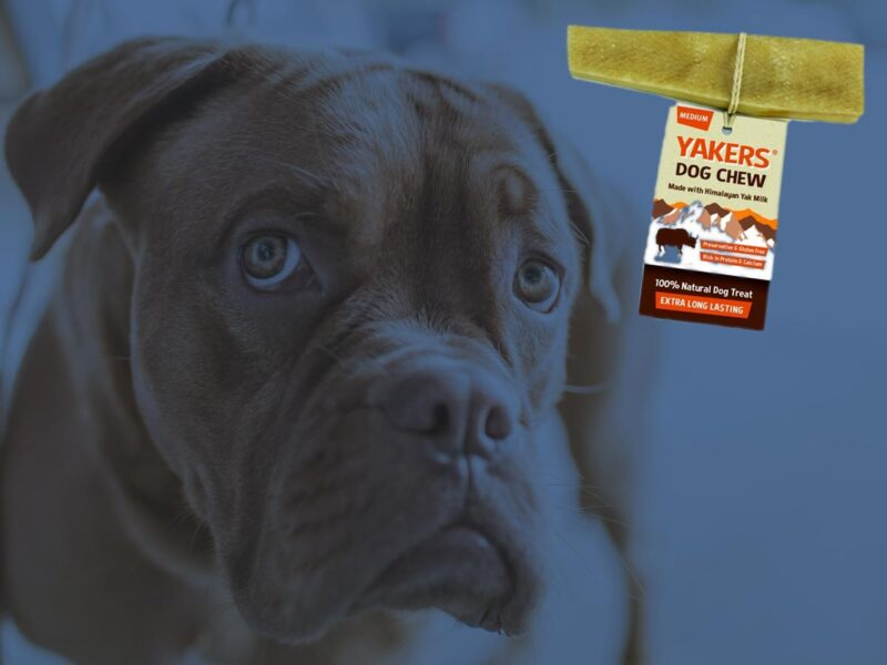 Are Yakers Dog Chews Safe?