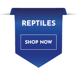 reptiles accessories the pet centre uk