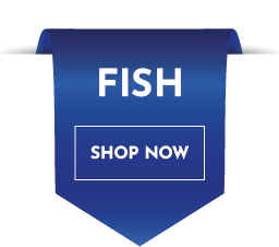 Buy Fish and Accessories