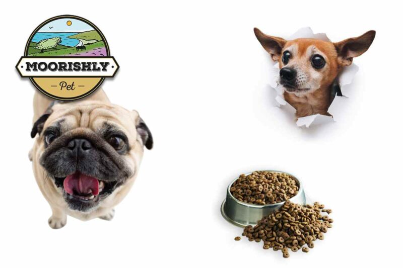 What's the right light dog food for small dogs